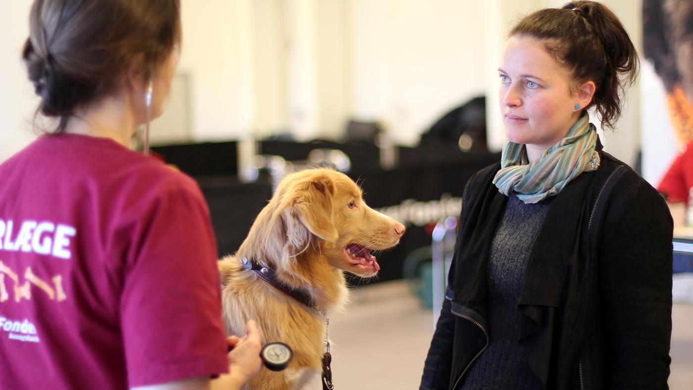 På sessionen sikrer TrygFonden, at besøgshundene er raske. Det er hundeejerens ansvar at følge op på dette med bl.a. vaccination og dyrlægebesøg.