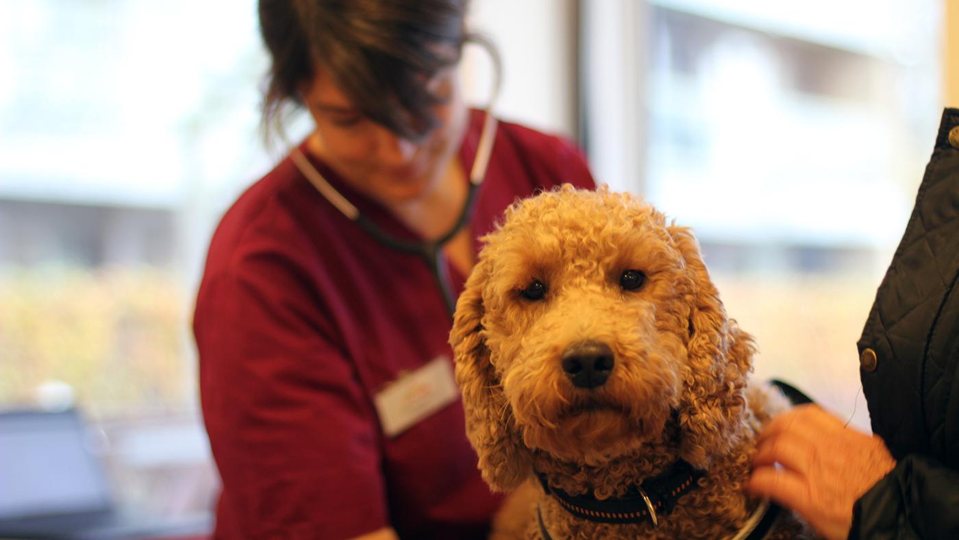 Både besøgshunden og de beboere, den besøger, skal have en god oplevelse – og ejeren skal være klar på at være besøgshundeejer. Se hvordan, vi sikrer os, at det er de rigtige hunde og ejere, vi optager.